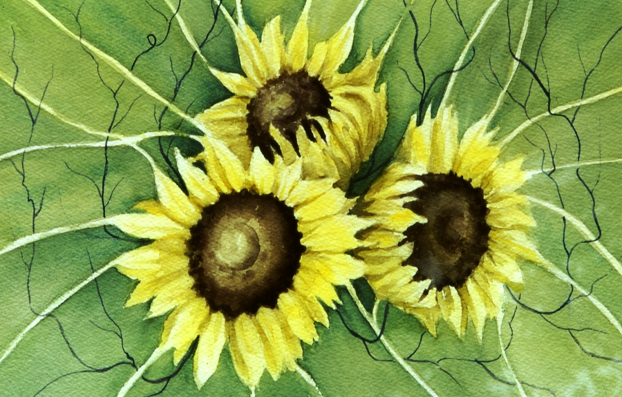 sunflower1th